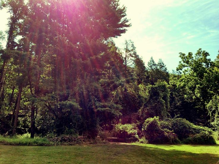 great lawn1